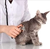Ветеринарные клиники в Арзамасе